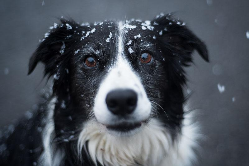 zimske-nevarnosti-za-pse