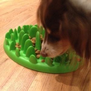 podloga za počasno hranjenje psa
