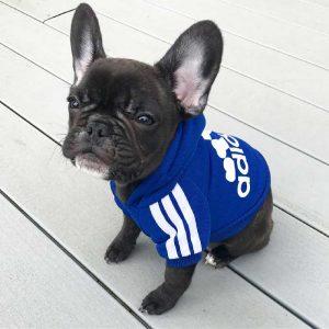 adidog-pasji-pulover