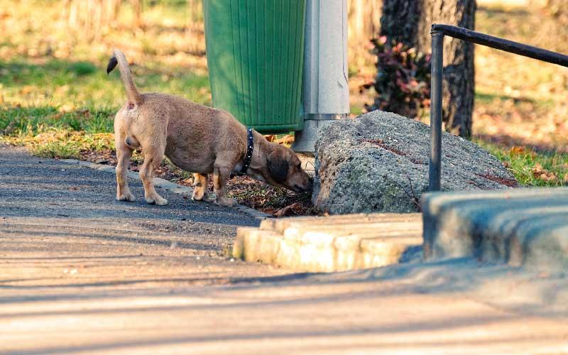 pes, ki pobira smeti